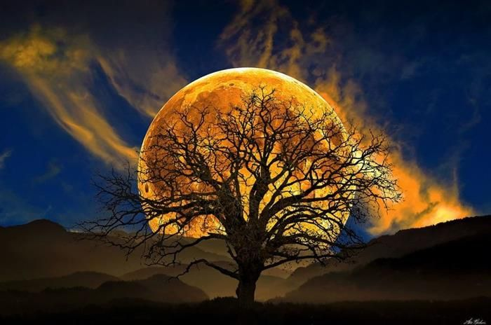 """""""Existem noites em que os lobos ficam em silêncio, e apenas a lua uiva."""" George Carlin"""