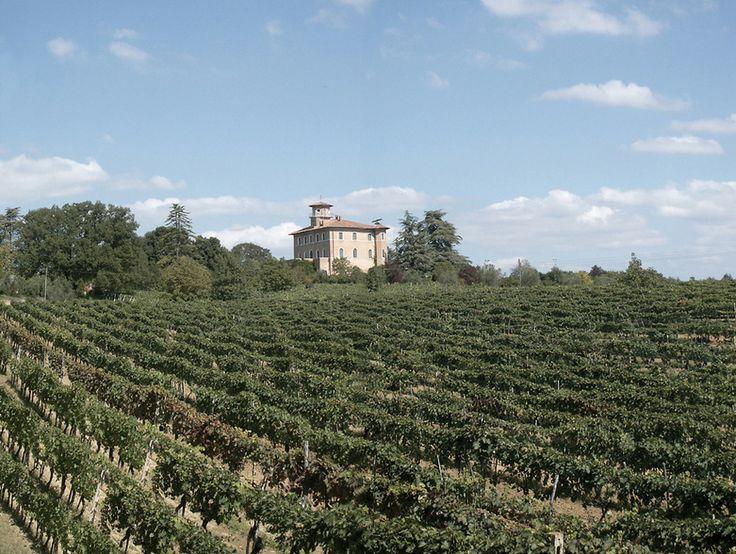 Azienda - Azienda agricola Poggio alla Sala Vino Nobile di Montepulciano