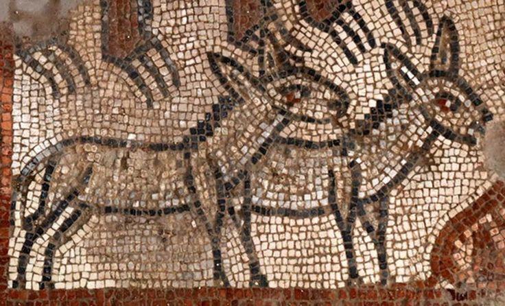 F: Baylor Üniversitesi. İncil'deki en ünlü sahnelerden birini tasvir eden mozaikler İsrail, Aşağı Celile'deki antik bir sinagogda yapılan kazılar sırasında ortaya çıkarıldı.