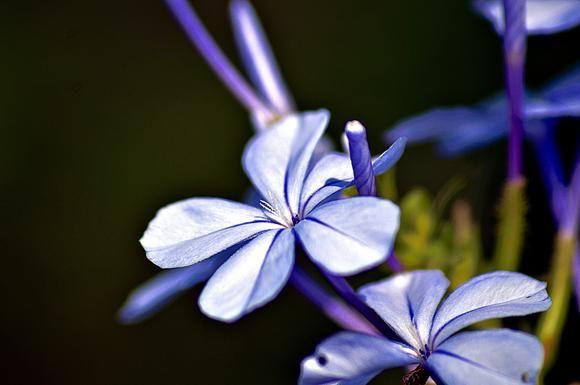 Lavender Extravagance