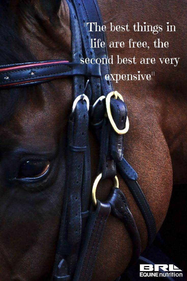 Horses are expensive but worth every penny! horse quote