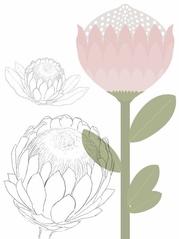 Illustrations for a Custom Protea-Themed Scrapbooking Pack