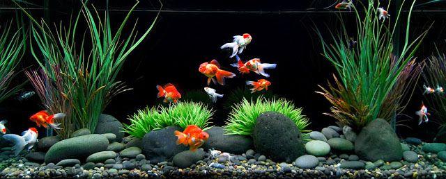 MaquaM: Consejos básicos para el acuario de agua dulce:Sustrato