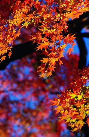 ✮ Autumn colors in Japan