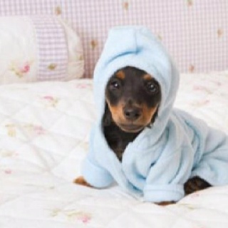 tiny pup in a hoodie towel - is there anything better?!