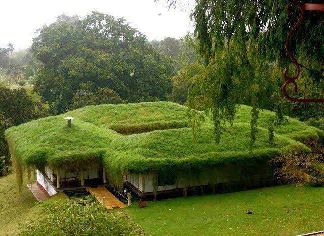 """Green"" house! I love you ... #green #house"