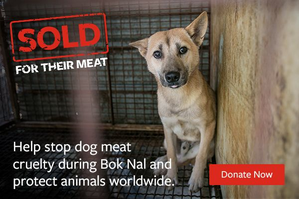 Stop The Cruel Dog Meat Trade Humane Society International Humane Society Dogs Animal Protection Dogs