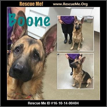 """""""Click here to view German Shepherd Dogs for adoption, or post one in need."""" ― ♥ RESCUE ME! ♥ ۬"""