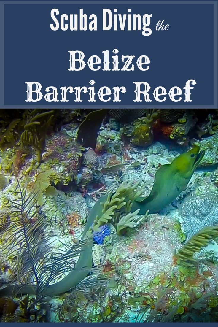 The Belize Barrier Reef is arguably the most beautiful place we've ever gone Scuba diving. Watch the video to see Spotted Rays, Lobsters, Pufferfish, Seahorses, and a Moray Eel out in the open water!