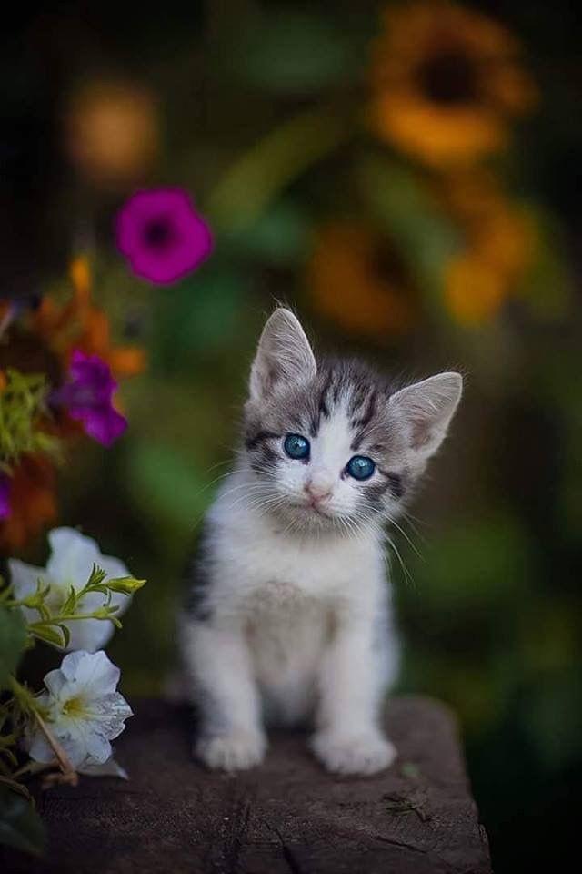 Pinterest Montesemily287 Beautiful Cats Pretty Cats Cute Cats