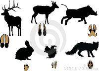 животные-изолировали-свои-сле-ы-белые-10264717.jpg