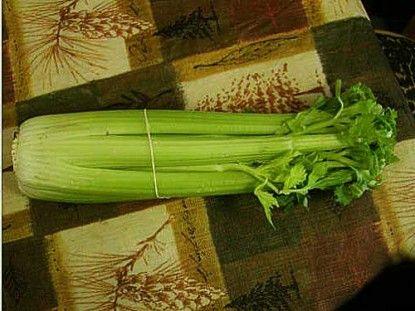Re-Growing Celery  - That's so cool!: Gardens Ideas, It Work, Celery Bottoms, Acr Farms, Providence Acr, Celery Stalks, Re Growing Celery, Green Onions, Regrow Celery