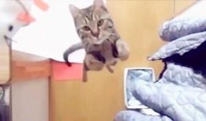 Οι πιο αστείες γάτες του κόσμου - σε ένα βίντεο!