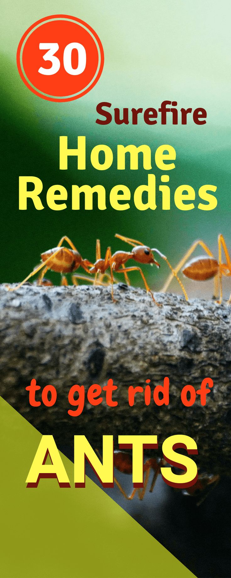 30 home remedies to kill ants from home and garden get