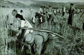 Μάχη της σοδειάς στη Θεσσαλία (1944)