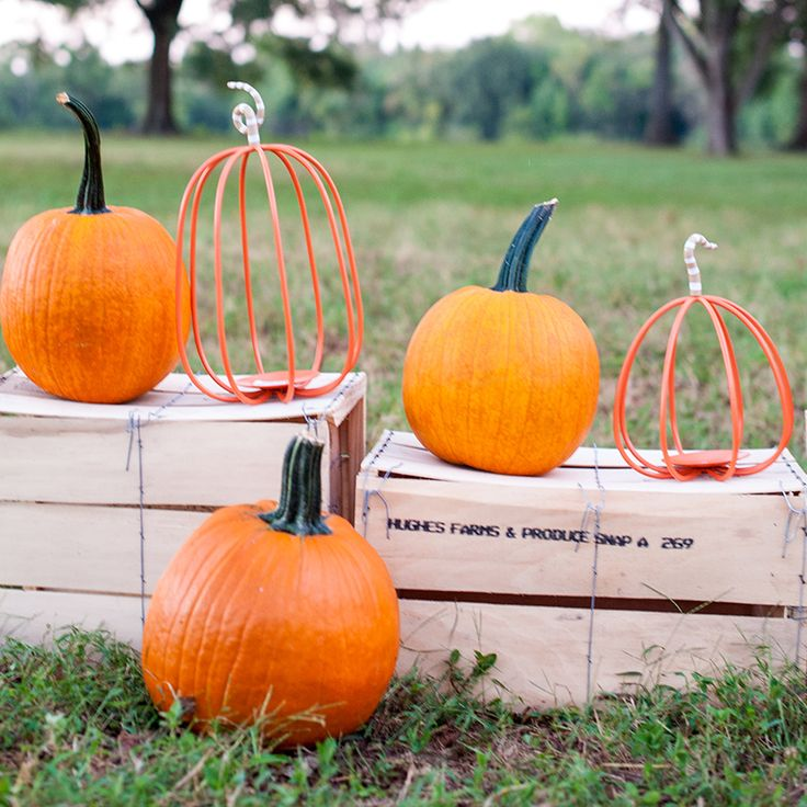 Five little pumpkins sitting on a crate connie bell