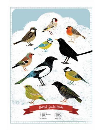 British Garden Birds Poster   Hello Polly