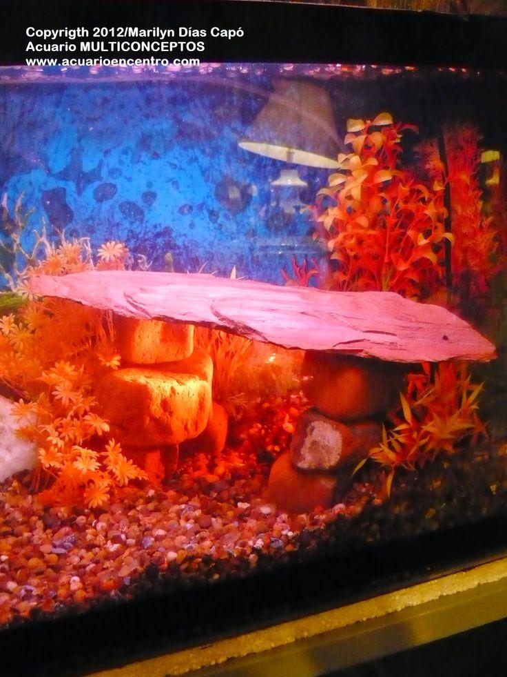 M s de 25 ideas incre bles sobre peces de agua dulce en for Peces agua dulce tropicales para acuario