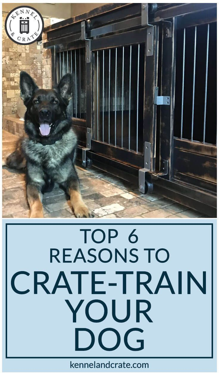 6 Top Ways To Make Your Dog Love Their Kennels Crate Training
