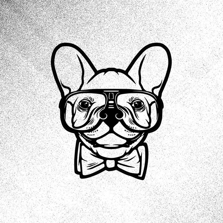 Crazy Frenchie Dude by Justin Graziano // http://j-graz.com // http://frenchiesordie.com