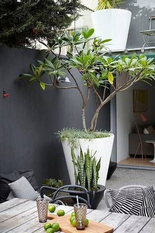 urban garden ideas gray exterior with potted tree