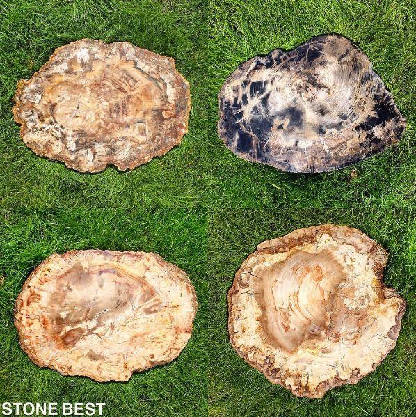 Представляем Вашему вниманию, срезы и пеньки окаменелого дерева в наличии, происхождение остров Мадагаскар, примерный геологический возраст около 240 млн лет, класс - полудрагоценные камни. полудрагоценные камни окаменелое дерево   мрамор оникс гранит слеб интерьер ванная комната столешница подоконик слэб ванная дизайн интерьера дизайн проект травертин stone best onyx marble granite oniks luxury lux life bath design interior marmi water jet bathroom luxury life