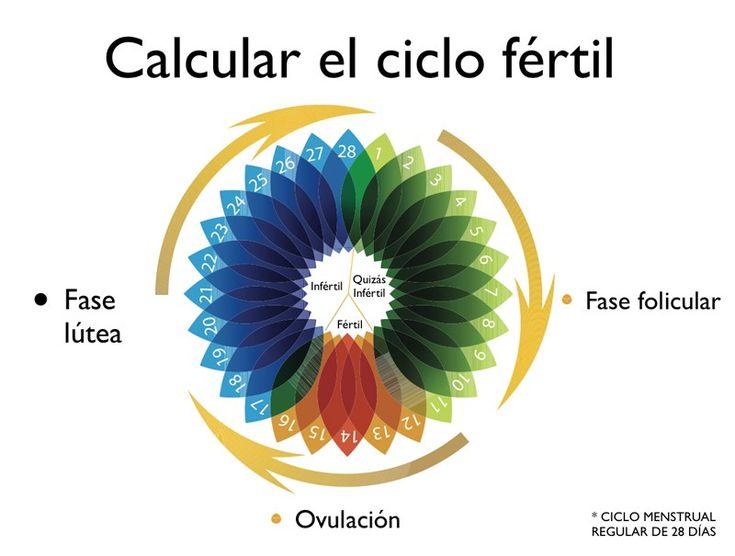 Calcular el ciclo fertil