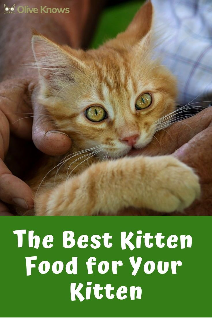 Best Kitten Food For Your Little Feline 2019 Edition Kitten Food Kittens Cat Toilet Training