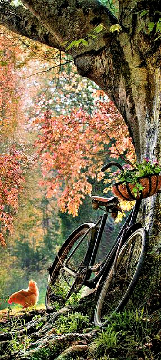 Bike with a basket full of flowers in the silence of the woods