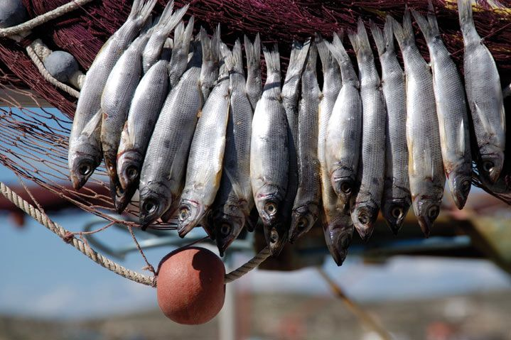 traditional fish festival  Paros Cyclades, Greece