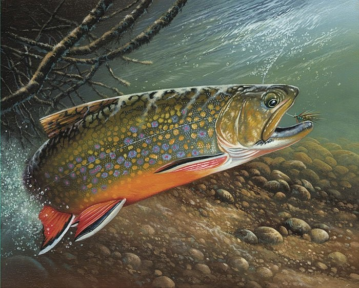 33 best wisconsin trout stamps images on pinterest for Trout fishing wisconsin