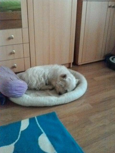 Můj pes :-):-)