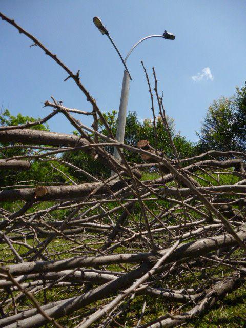 entre mas árboles van al suelo... :(