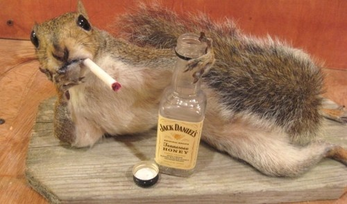 Grey Squirrel Taxidermy Mount Liquor Bottle Cigarette Tobacco Fur Claws Hair | eBay