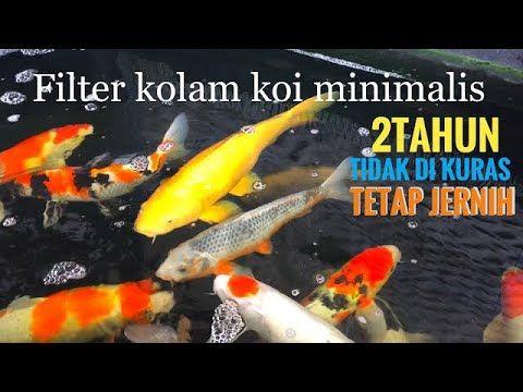 Tips Filter Kolam Koi Dan Membuat Arus Plus Supply Oksigen Kolam Dengan Eductor Ejector Atau Ventury Youtube Kolam Kolam Ikan Filter