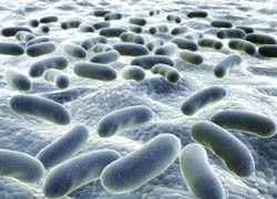 Engineering patterns in bacteria