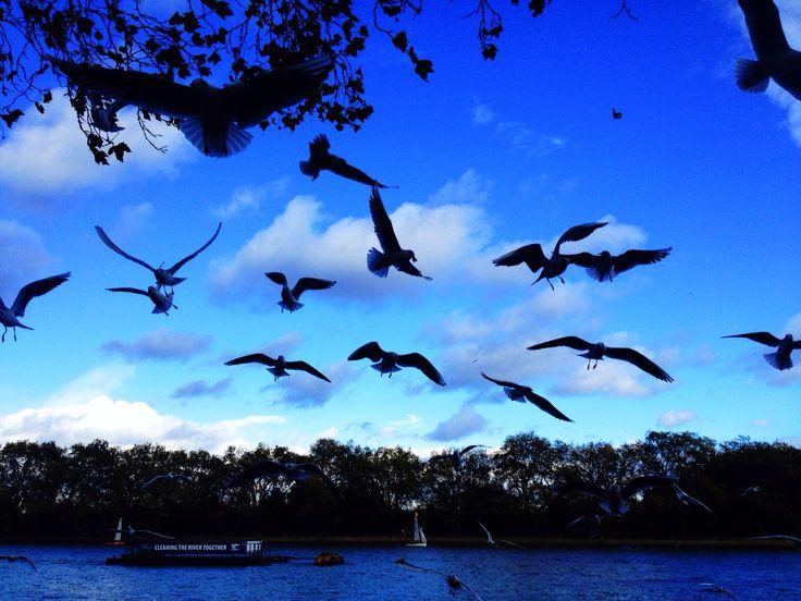 Like a bird I want to fly high, riverside walk