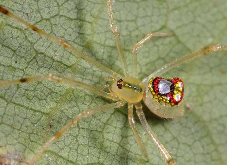 Mirror Spider | The Striving Muslimah Blog