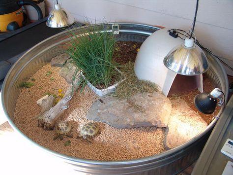 Indoor Tortoise Enclosure
