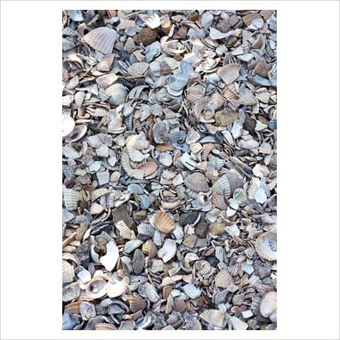 Shell mulch.  Could we do this in yard under fire pit?