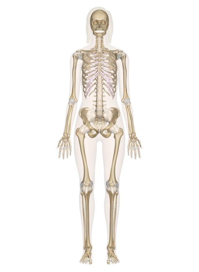 musculoskeletal system diagram   musculoskeletal system diagram skeletal  system labeled diagrams of the human skeleton