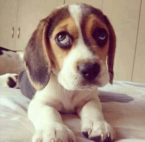 Vragende puppy ogen love brokjes❤️