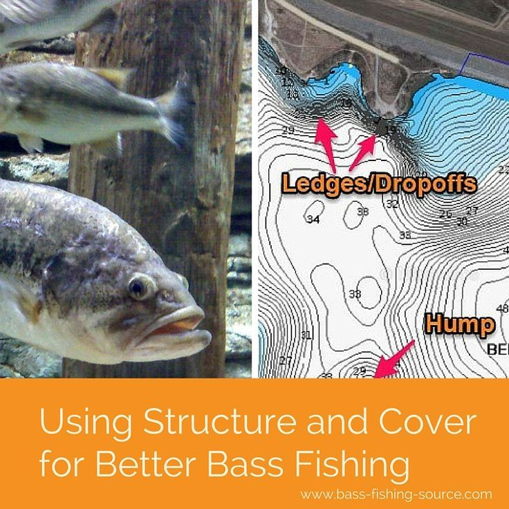 524 best images about freshwater fishing on pinterest for Bass fishing techniques