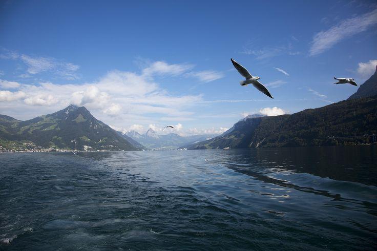 View from Wilhelm Tell Express boat, Switzerland