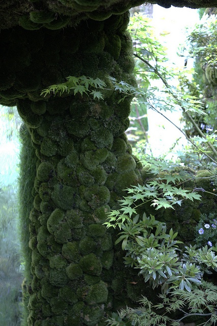 Moss walls... Kazuyuki Ishihara