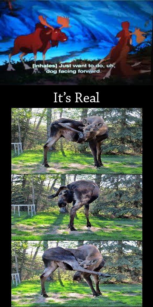 Moose Yoga