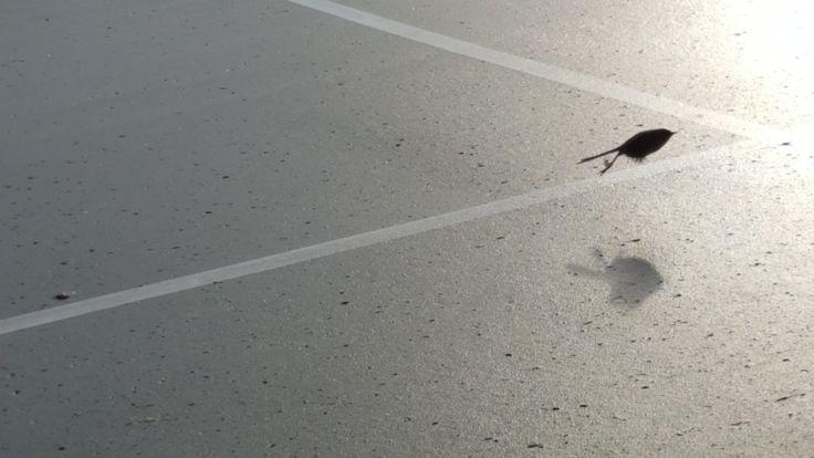 Bird in flight 😃