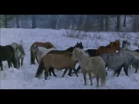 Фильмы о лошадях.  Шаман (1996)