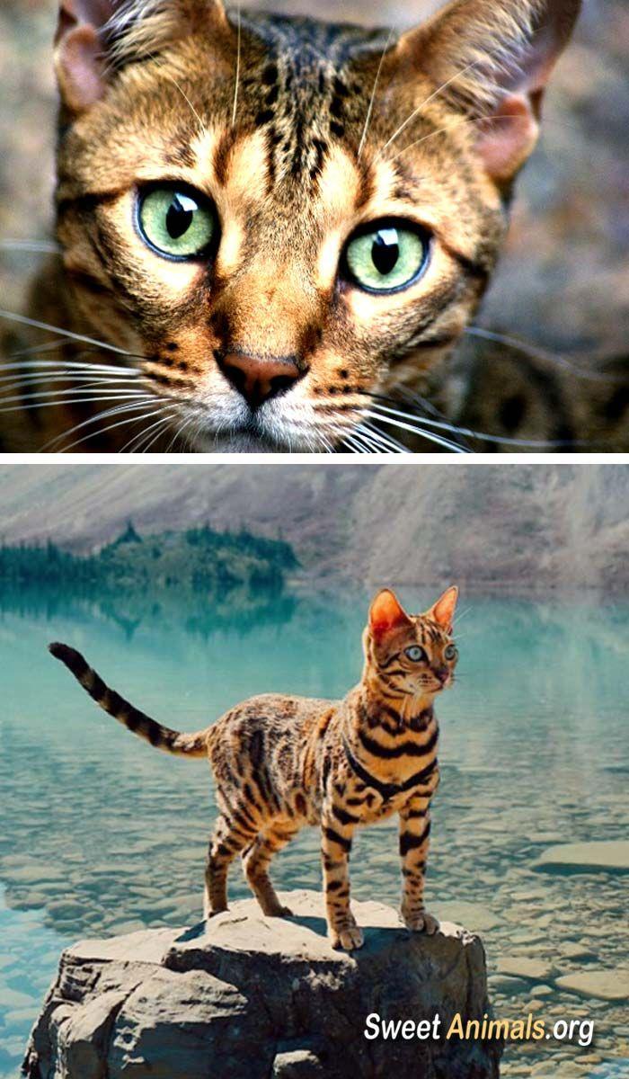 Mejores 45 Im Genes De Gatti En Pinterest Gatitos Gatos Bonitos  # Muebles Gatti Rosario