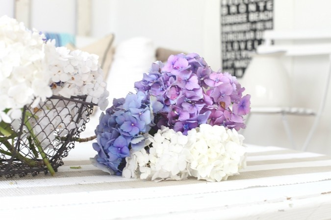 how to change colour of hydrangea back to white